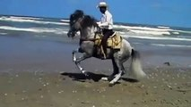 UN CHEVAL DANSE LA COUNTRY SUR  LA  PLAGE  - A HORSE DANCE THE COUNTRY ON THE BEACH