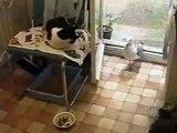 La mouette et le repas du chat...