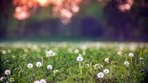 Dailymotion & Kokin Gumi - Zen Garden - Vidéo dailymotion