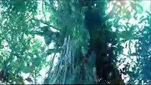 The Tree of life trailer from Terrence Malick
