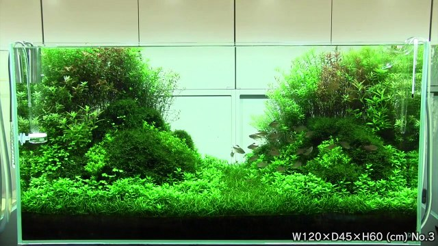 [ADA view 343] Follow-up video of NA Gallery aquariums.