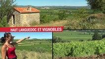 Vincoeurs Haut-Languedoc