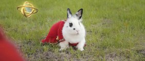 Epic Bunny's Adventure : Le lapin épique