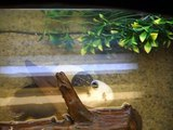 Meine Schildkröten:   Wrex vs Regenwürmer