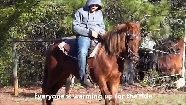 Tennessee Walking Horses & Speed Racking Horses with George Foreman