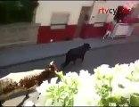 Herido grave por asta de toro en Tudela de Duero, Valladolid