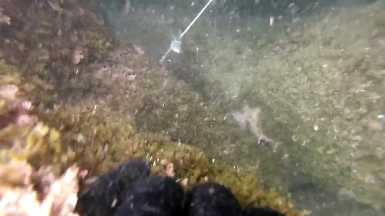 Chasse sous marine 10 dorades 1 loup 5 sars