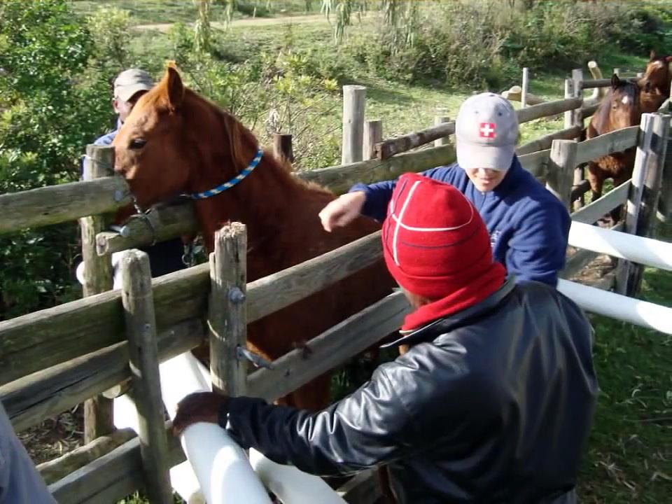 Mamre Horses