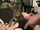 Dont Put Your Hands on My Owner