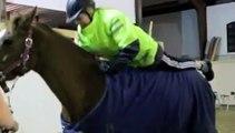 Träning till häst