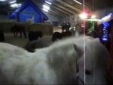 100 CHEVAUX SUR L HERBE - Clip vidéo, Noel 2011 de 100 chevaux sur l'herbe
