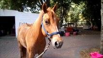 Voice Over Riding Raws || Riding camp 2015