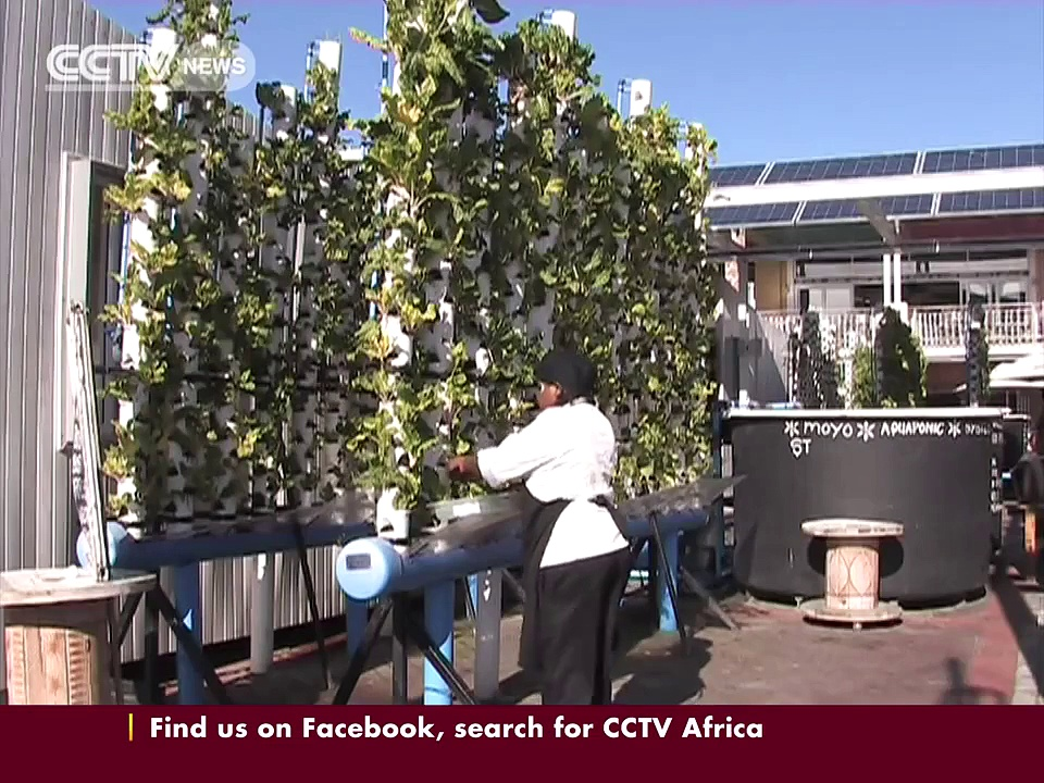Aquaponics in South Africa: Fish and plants live in symbiosis