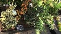 Les bonnes pratiques du jardinage écologique - Truffaut TV