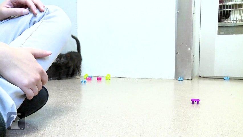 Kitten Parkour Is Impressive