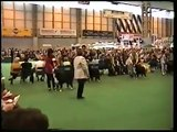 Crufts 2001 Bernese Mountain Dogs Best of Breed Judging 2001