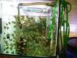 PECES DISCO la habitación de los peces