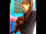 progetto animalista per la vita il video dei pelosi salvati