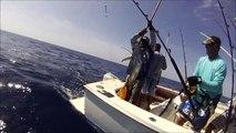 Yellowfin Tuna fishing Cabo San Lucas with Renegademike sportfishing