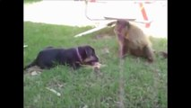 Best Funny Videos 2015 -Funny Videos Fails Compilation -Funny Animal Videos -Funny Dog - Crazy Cat.