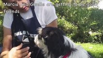 For Animal Rescue Groups, Please rescue Giselle asap. Thank you!