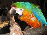Parrot Refuge World Parrot Refuge Bird Tales