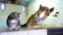 La relation existant entre ce chat et ce cheval est tout simplement adorable ! Découvrez leurs interactions émouvantes !