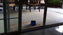 Puppy Runs Into Screen Door