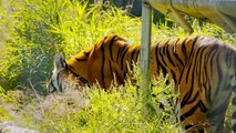 The Wildcat Sanctuary - a big cat sanctuary who is helping create a world of No More Wild Pets