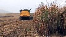 Récupérateur de menue paille : récolter les rafles de maïs pour les bovins à l'entretien