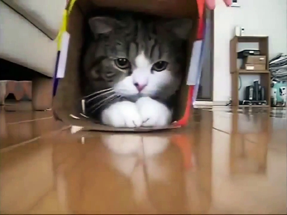 Animals Funny Videos Cat Video Cats Videos Funny Cat Videos Funny Cats Videos Pet Videos