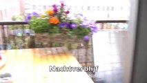 Blauwgele ara probeert te ontsnappen ( Blue & Gold Macaw Trying To Escape )