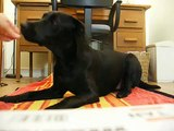 Dog Barking & be quiet with clicker training -  im following instructions