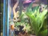 Pondscape us - Clients - Ocean Design Aquarium - Store Tour