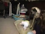 Baby laughing at his dog Funny baby  funny dog videos   funny dog vines, baby 3