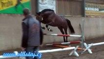 JUMPER PROSPECT FOR SALE: Flintstone, 2010, Eldorado x Roven, free jumping 08 14