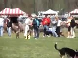 Frisbee Dogs - Border Collies & Aussies - Frisbee Disk Dogs