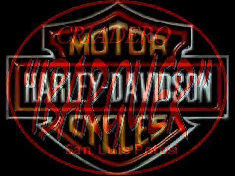 HARLEY DAVIDSON PROYECTO_0001.wmv