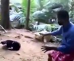 When Crazy Animals Attack Dog with rabies attacks crazy man! ~ Best Funny Animals 20141