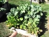 Fall Garden Update - October 25 - Raised bed square foot garden organic grow food free