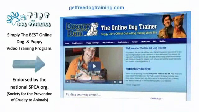 An Honest Review Of Doggy Dans Online Dog Trainer.