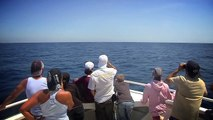 balade d'observation des baleines et dauphins en Méditerranée