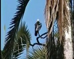 Where the Wild Greys Are-Grey Parrot Conservation