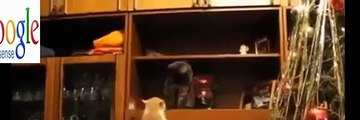 Funny Videos 2015   Funny Vines Cats   Funny fails Cats Videos   Funny Cat Videos   Cool Crazy Cats