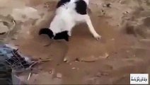 Perro entierra a otro perro - su amigo