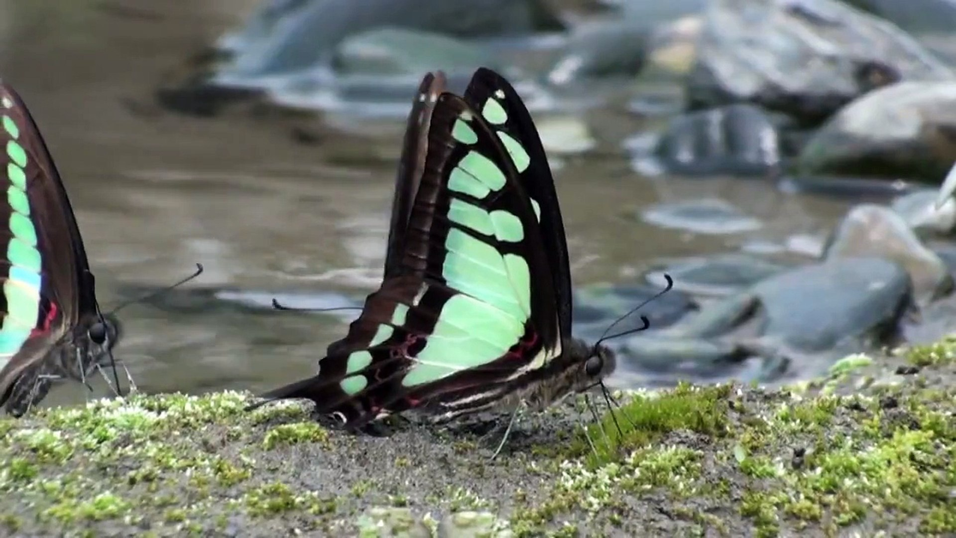 Step By Step Origami Swallowtail Butterfly Instructions