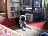 Ben my Border Collie doing his can trick to the song Ben