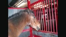 du måste finnas-Världens bästa häst