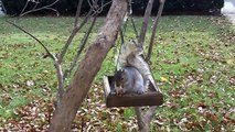 Squirrel Fight in Slow Motion