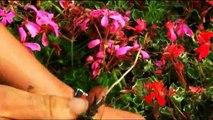 Août : le désherbage du jardin (L'éphéméride des jardiniers 8/12)